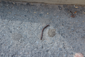 earthworm at 9/11 site in New York illustrating redemptive life
